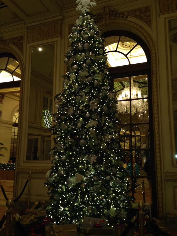 plaza_Tree