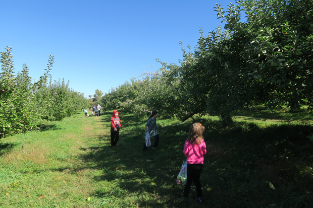 maskers_orchard_5