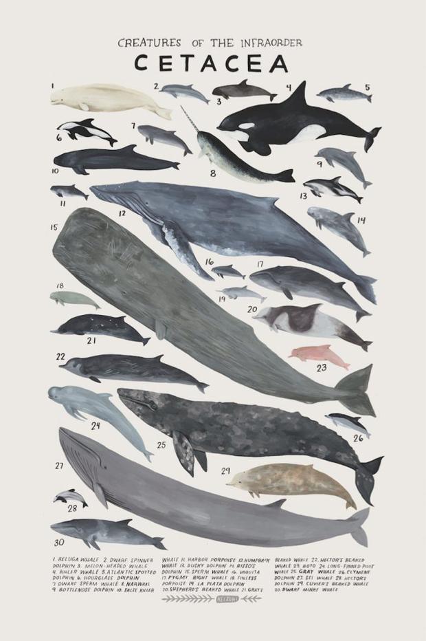 kelsey-oseid-kelzuki-animal-art-print